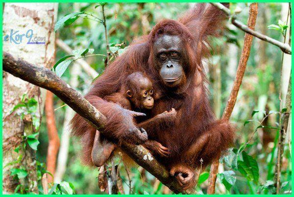 11 Hewan Khas Indonesia Yang Harus Kamu Tau Dunia Fauna Hewan Binatang Tumbuhan Hewan Binatang Hewan Langka