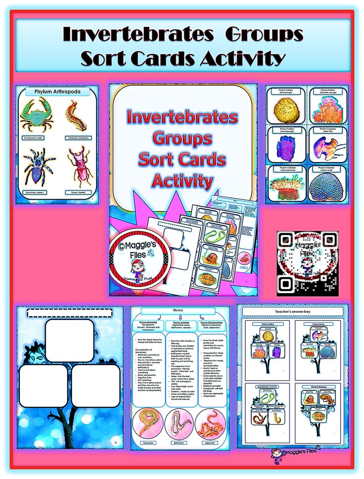 "The "" Invertebrates Groups Sorting Card Activity"" is design to help your students review, reinforce and assess their knowledge about the main groups of invertebrates. This activity is design for secondary students. (6-12)http://www.teacherspayteachers.com/Product/Invertebrates-Groups-Sorting-Card-Activity-1302619"