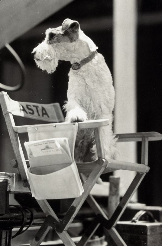 Asta, from the Thin Man movies, originally in the book Asta was a girl and a schnauzer.