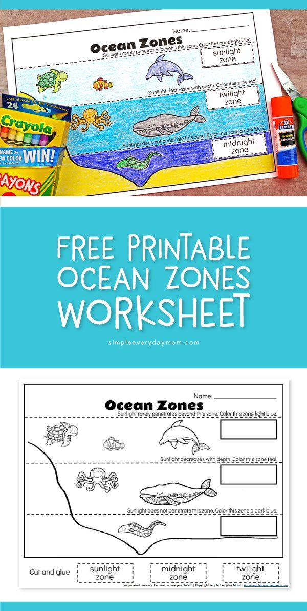 Ocean Zones For Kids Learning About The Amazing Ocean Ocean Kindergarten Ocean Zones Ocean Theme Preschool