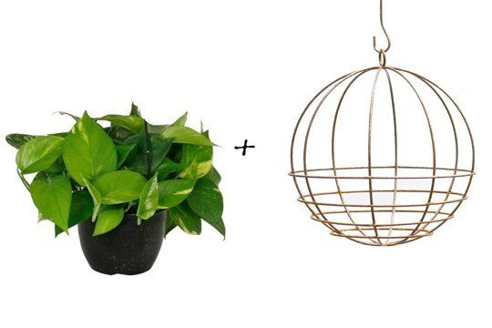 House Plant Cheat Sheet: 10 Great Vessel & Plant Pairings | Apartment Therapy