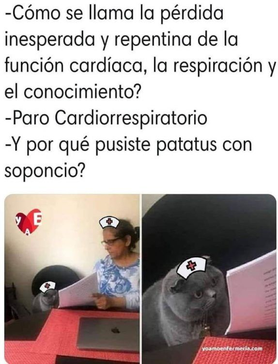 Pin En Memes Del Gato