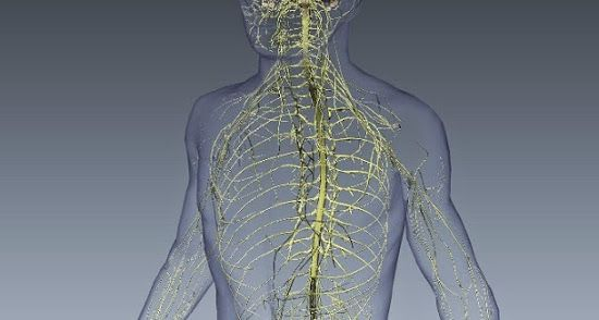 A neuropatia refere-se a qualquer condição que perturbe ou danifique os nervos do sistema nervoso periférico. Conheça a condição.