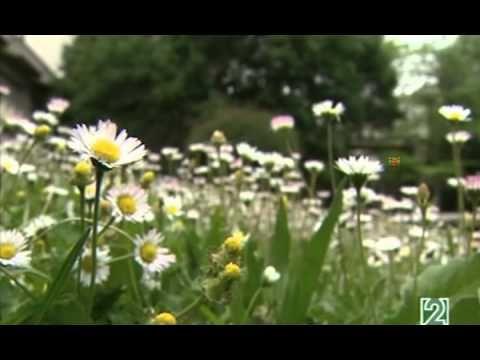 La Vida Secreta De Los Árboles (Capítulo REDES 398) - YouTube