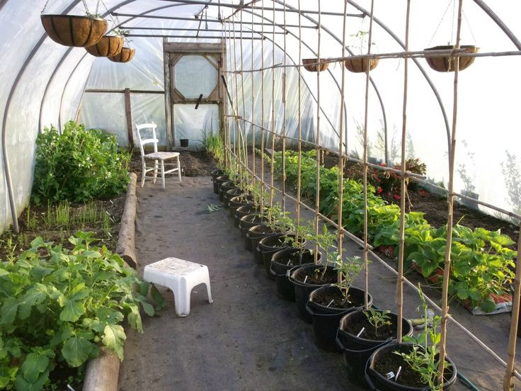 17 best images about domestic polytunnels on pinterest for Domestic garden ideas