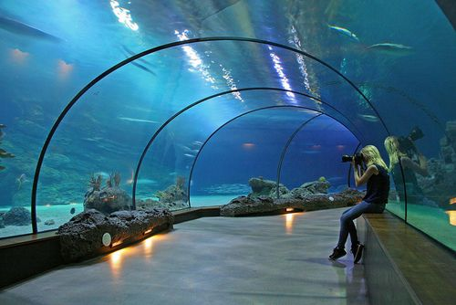 Aquarium Rotterdam, Netherlands images - Google Search