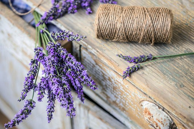 Lavender flowers  by Grafvision photography on @creativemarket