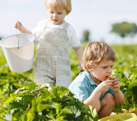 Gode vejvisere til jer, der er på jagt efter steder med Grav-Selv og Pluk-Selv ... BarneGuiden.DK