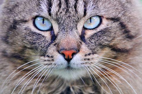 """Did you know that a cat's brain has 1,000 times more """"data storage"""" than an iPad? Click to learn more: """"How does a cat brain compare with a human brain?"""""""