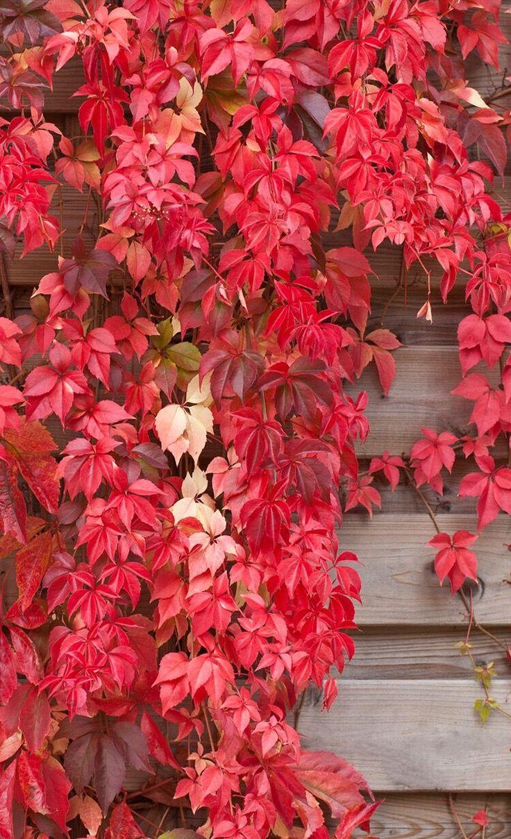 Nature, autumn