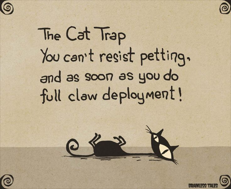 The Cat Trap
