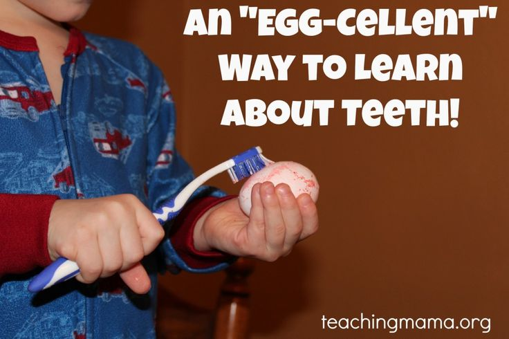 Learning about teeth. Good preschool activity too. Apologia Exploring Creation with Anatomy & Physiology #homeschool