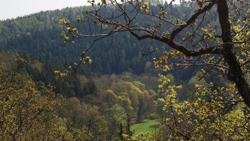 Terezské údolí  / Romantická procházka hanáckou přírodou shercem Ladislavem Lakomým (2009). Režie I.Stříteský