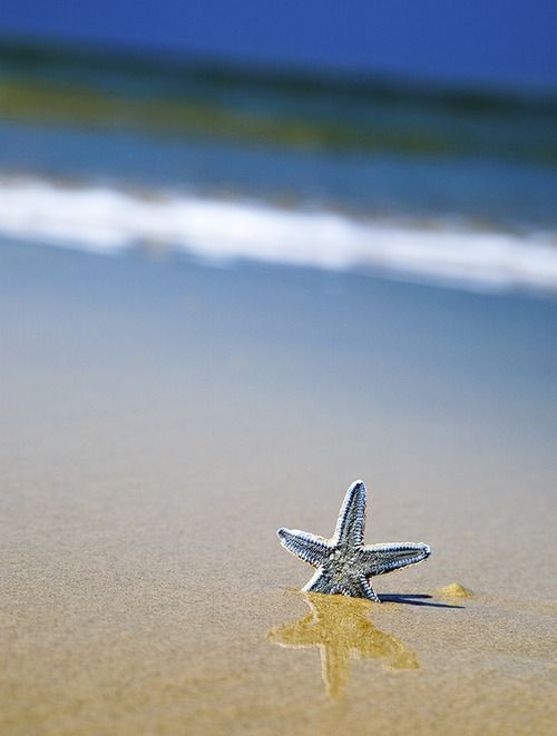 ❤ at the BeachWater, Sands, Beach Starfish, Sea Stars, Shells, Ocean Waves, At The Beach, Beach Photography, Places