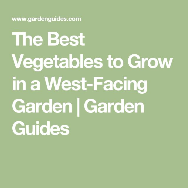 The Best Vegetables to Grow in a West-Facing Garden | Garden Guides