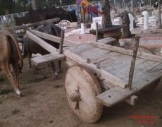 Wood Ox Cart