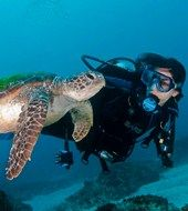 Swim with the turtles at Sundive Byron Bay.