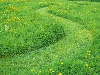 Caminho de relva entre prado florido