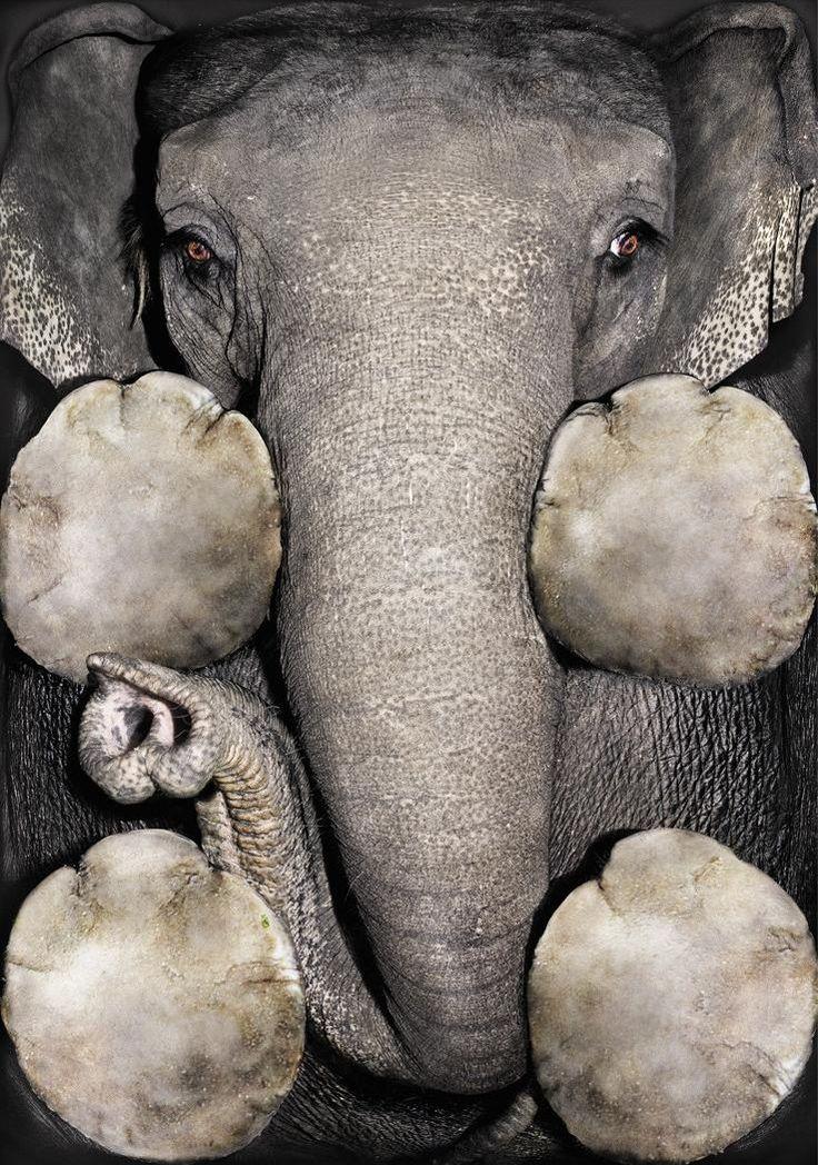 Elephant Bottom. Taken from ad for a zoo in Zurich, Switzerland - Imgur