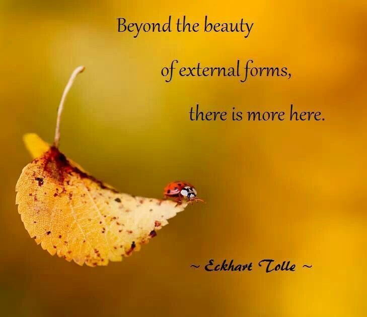 Eckhart Tolle. Every outer has an inner. Creation is in layers each more powerful the deeper we go. Go within with TM® https://www.facebook.com/TM.UK.Women/app_128953167177144