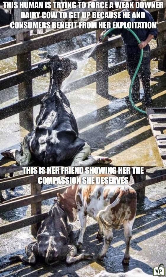 Extremely Sad and Heartbreaking. Look at her body. Look at the love animals has…