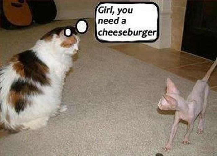 Cheeseburgers, Funny Cats, Hairless Cats, Funny Stuff, Too Funny, Skinny Girls, Fat Cats, So Funny, Kitty