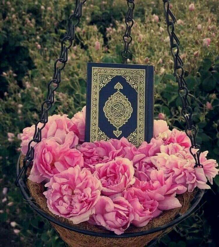 Красивые картинки с надписью аллах и коран, дню учителя сова