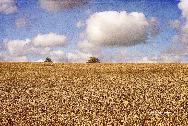 Field & Clouds