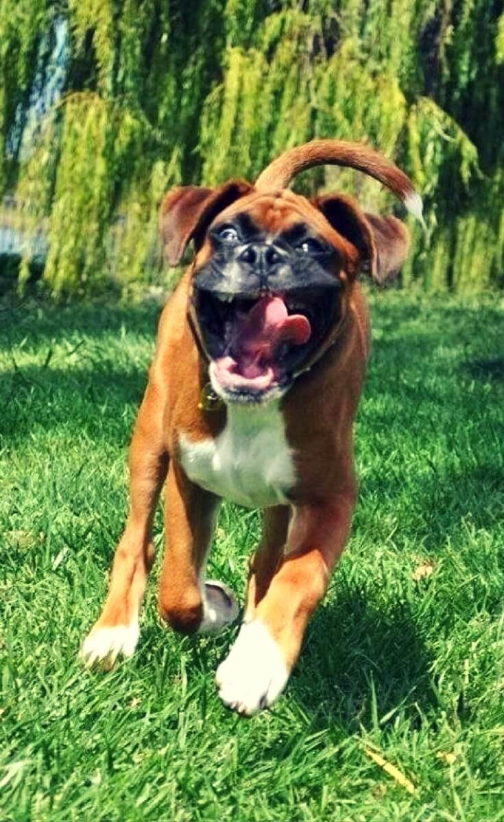 funny boxer the best