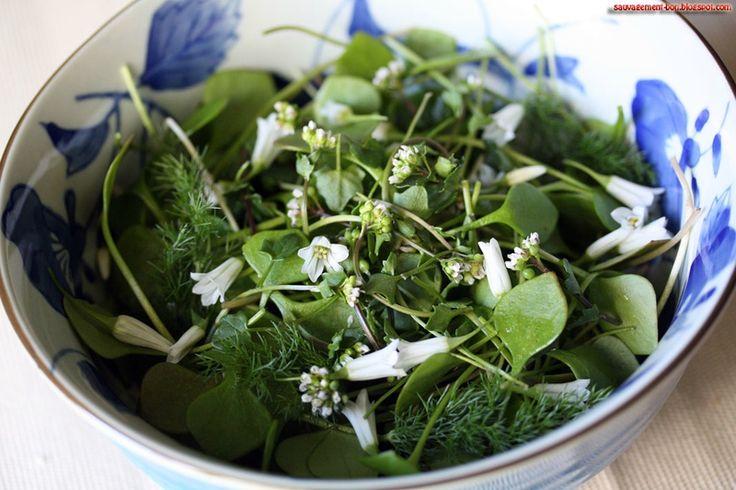 A votre santé ! précautions pour récolter des plantes sauvages