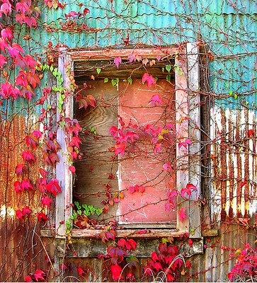 Wish I would have lingered more on Fall...: Colour, Pastel, Window, Vines, Colors Combinations, Colors Palettes, Pink, Old Tins, Flower