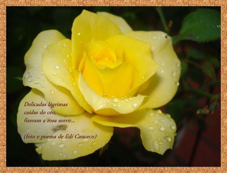 poema  A rosa e a chuva