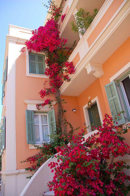 bougainvilleas in Corfu, Greece