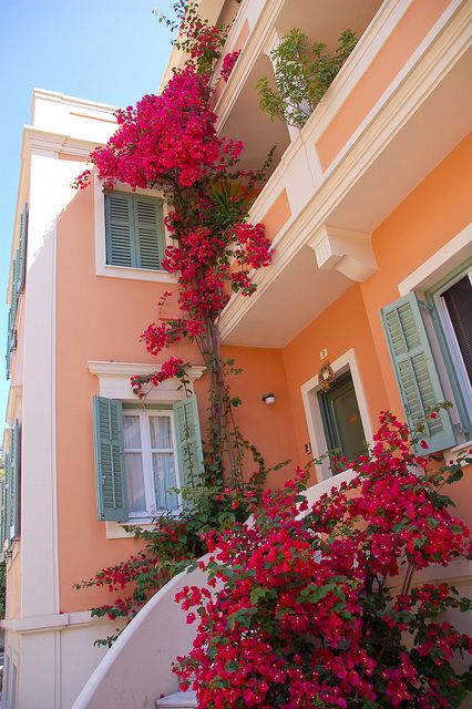 bougainvilleas in Corfu, GreeceHow can you travel around the world without spending a fortune? Discounts of up to 70% of the usual prices! https://swisshalley.com/en/ref/Kaldin