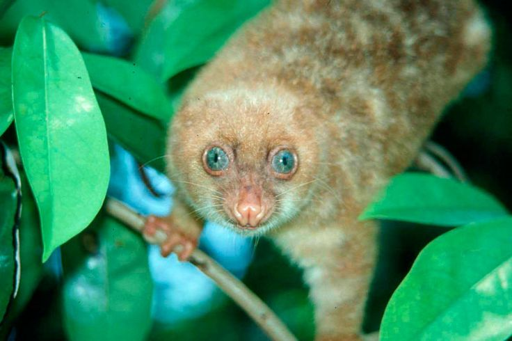 papua new guinea animal - ค้นหาด้วย Google