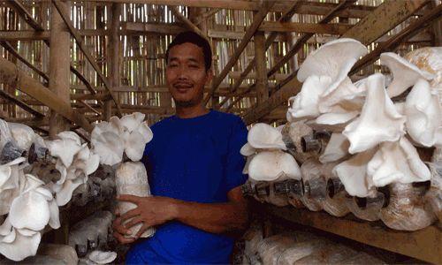 Peluang Bisnis Budidaya Jamur Tiram & Prospeknya | Peluang Bisnis