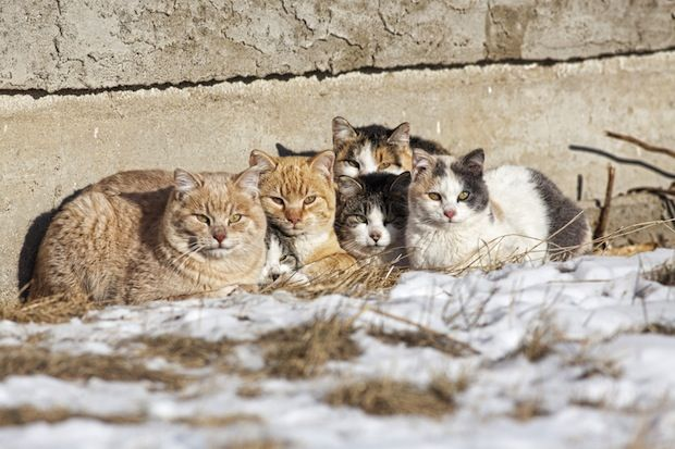 As of Jan. 1, 2015, cats over six months of age residing in Winnipeg are required to have a license. More than 13,000 cat licenses have been sold either online, through 311, at the Animal Services Agency or at a…