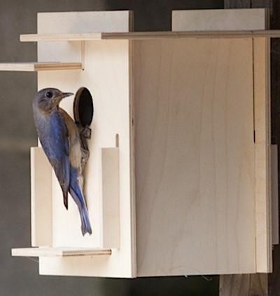 Box For Birds Birdhouse Kit—Modern
