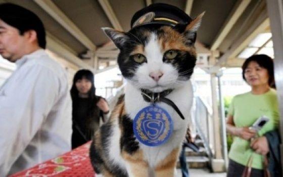 Tantv.kz - В Японии похоронили кошку, служившую начальником вокзала