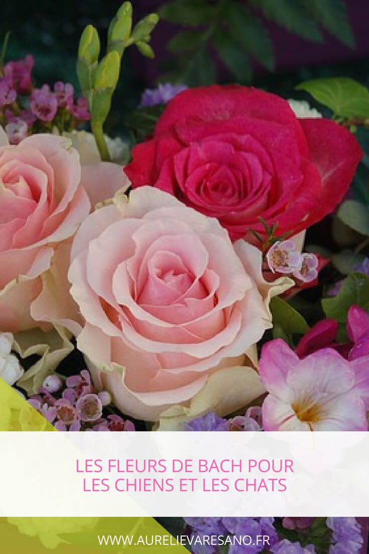 Les Fleurs De Bach Pour Les Animaux Afin De Soulager Leur Stress