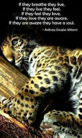 Image result for animal soul