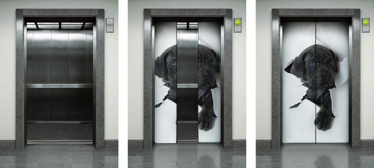 Funny Black Dog Photo Wallpaper In Elevator Door