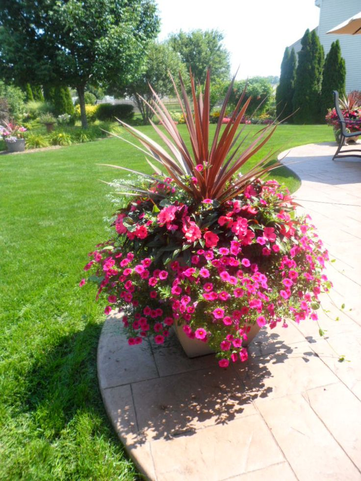 Large Pot New Guinea Impatiens Calibrachoa Dracaena Spike Purple Tower Garden Lovers