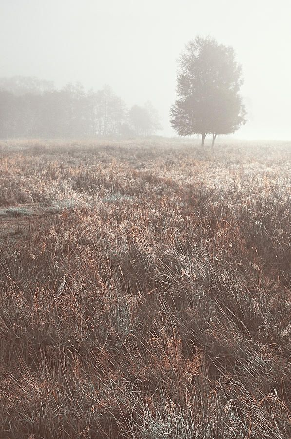 Foggy Morning On Scottish Fields by Jenny Rainbow
