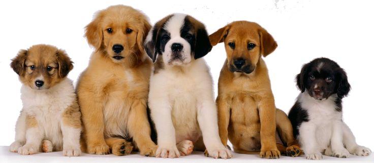 de unos perros muy hermoso