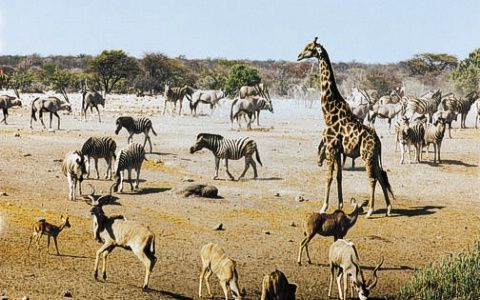 Google Image Result for http://www.africa-adventure.com/dbimages/584_namibia_etosha_waterhole_scene_md.jpg