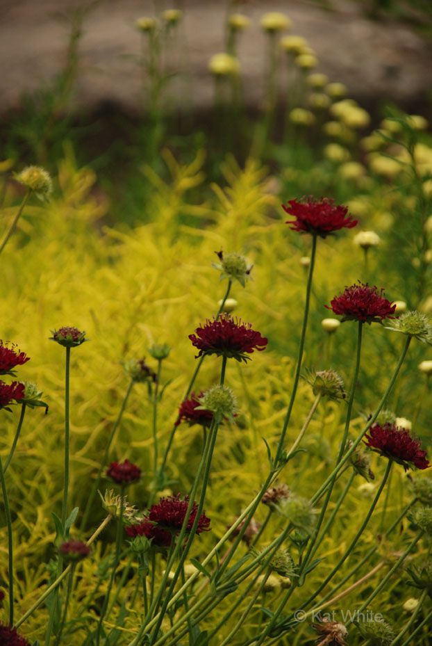 17 best images about garden inspiration on pinterest for Planting schemes with grasses
