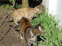 Coisas do Offline: Como espantar gatos - mais dicas