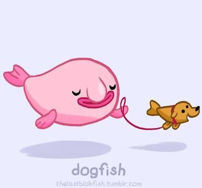 Do you make a bigger deal over the dogfish or the blobfish? I  blobfish but really a dogfish! This is my dream.