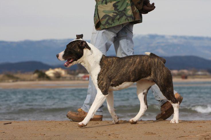 Apprennez à votre chien à marcher au pied quand vous lui en donnez l'ordre en suivant nos conseils simples et rapides à appliquer de chez vous !